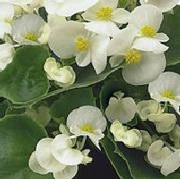 Farveskala hvid